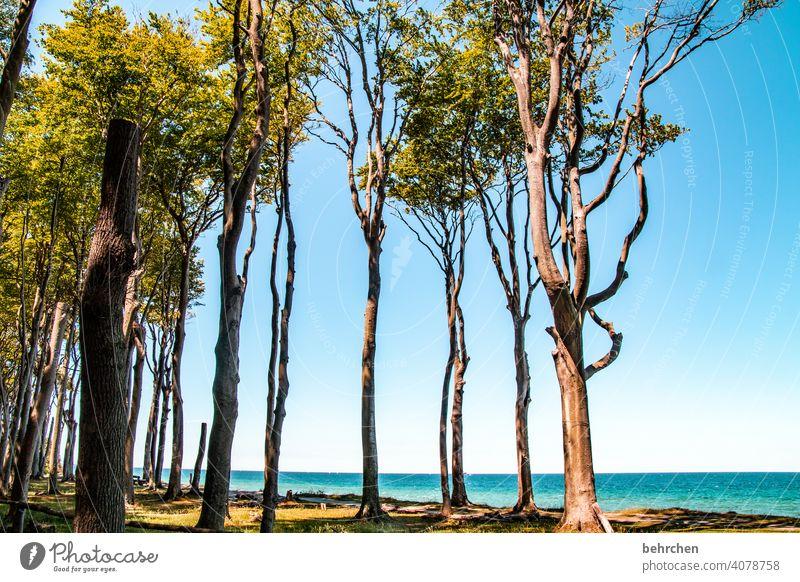 zwischenräume | links bäume, rechts bäume und dazwischen zwischenräume Außenaufnahme Ostsee Meer Strand Himmel Natur Landschaft Sommer Küste