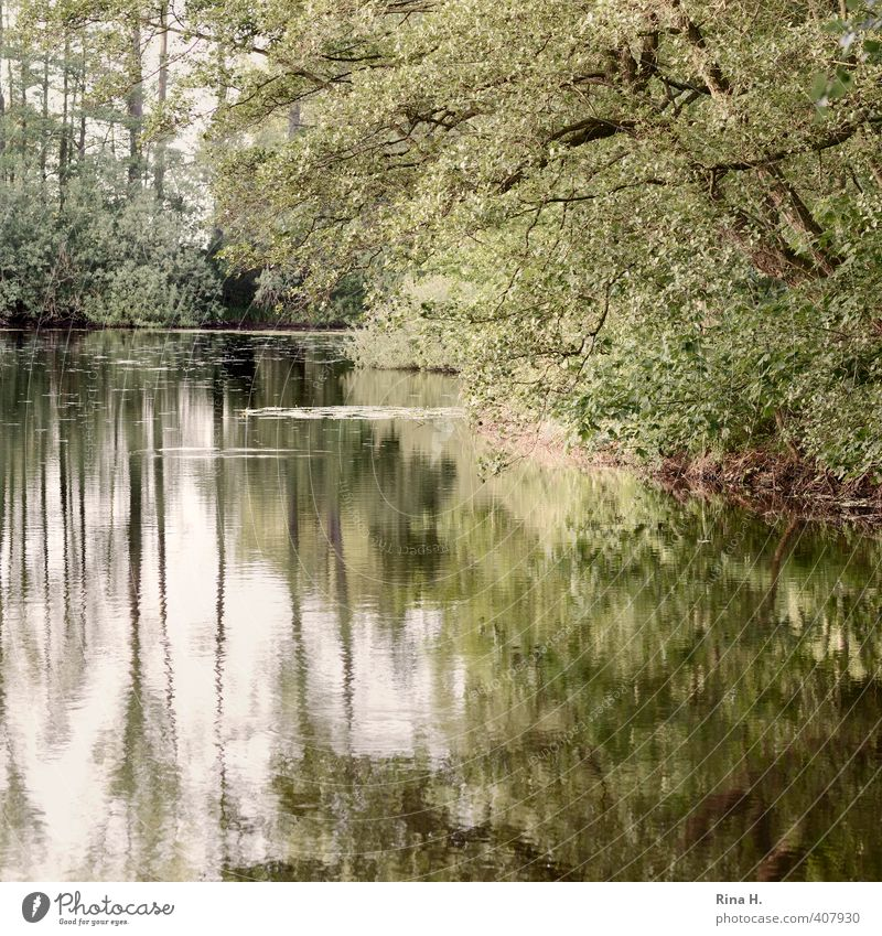 Schwanensee ohne Schwane Natur Landschaft Pflanze Frühling Baum Teich See natürlich grün Idylle ruhig Quadrat Farbfoto Außenaufnahme Menschenleer