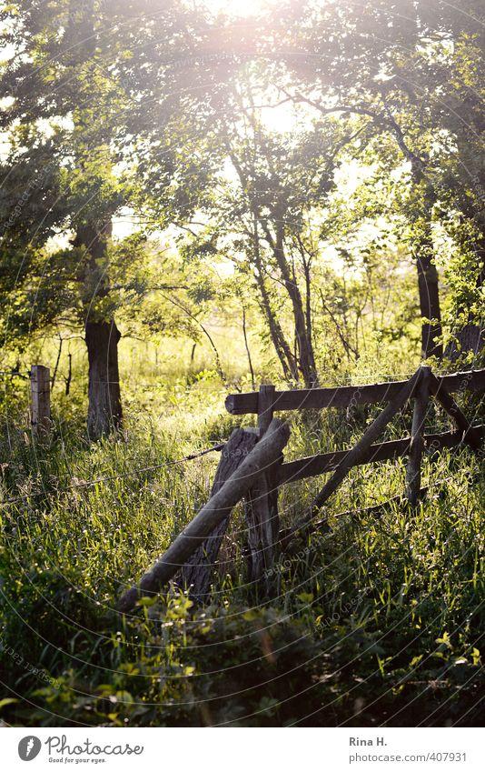 AbendSpaziergang II Natur grün Pflanze Sommer Baum Landschaft Wiese Gefühle Gras Frühling natürlich Feld Sträucher Lebensfreude besinnlich Pferch