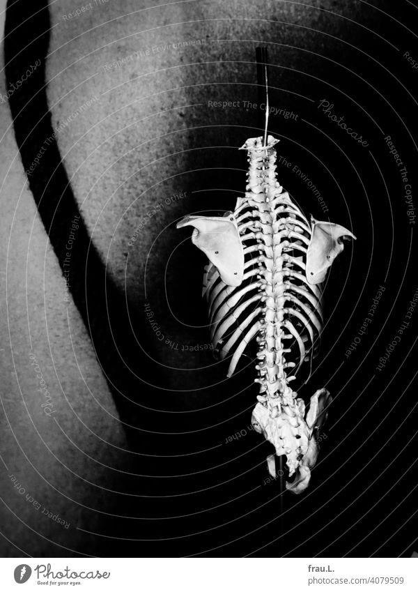 Skelett-Model Wirbelsäule Knochen Hüfte Physiotherapie Schulter Rippen Modell Mensch hüftknochen Gesundheit Gesundheitswesen Massage Krankheit Rückenschmerzen