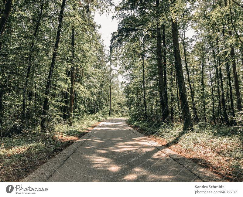 Waldweg waldweg baum bäume schatten straße feldweg himmel sonne sonnig sonnenstrahl sonnenstahlen sonniger Tag sonniges Wetter fröhlich Warm stimmung