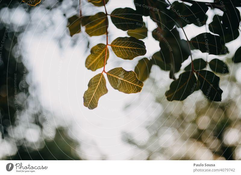 Grüne Blätter gegen den Himmel grün Baum Blatt Natur Menschenleer Herbstfärbung braun herbstlich Pflanze gelb Herbstlaub Frühling Hintergrund Gegenlicht