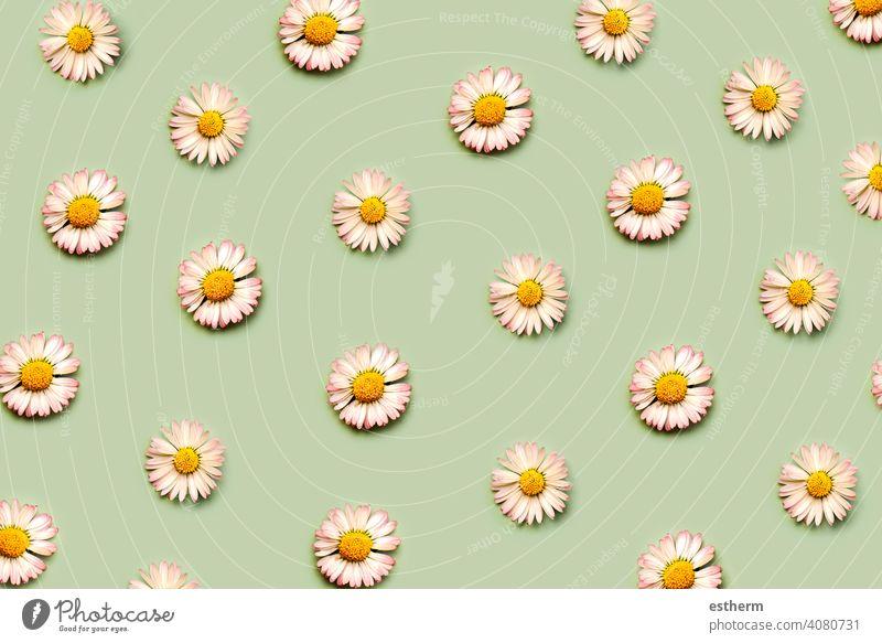 Draufsicht auf ein kreatives Muster aus weißen Gänseblümchenblüten, Frühlingskonzept weiße Gänseblümchen Allergie Pollen Allergien Krankheit rhinitis krank
