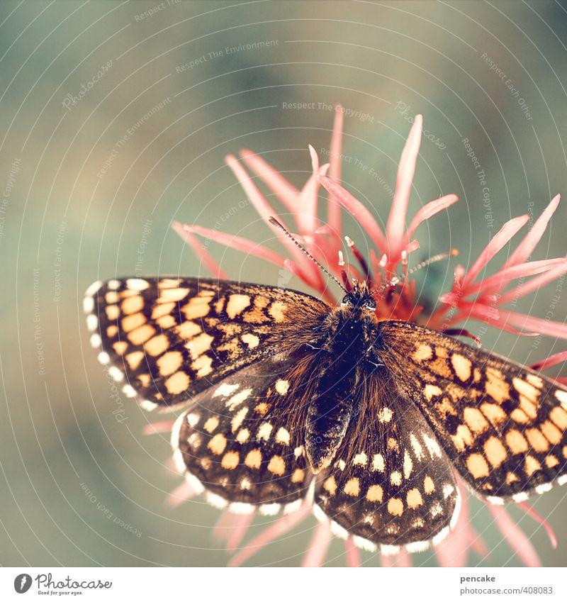 maximale entfaltung Natur grün schön Pflanze Sommer Blume Blüte Garten rosa gold frei Dekoration & Verzierung ästhetisch Flügel Zeichen nah