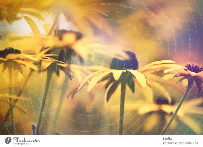Sommergefühl mit Gelben Sonnenhut Gelber Sonnenhut Rudbeckia Rudbeckia fulgida Blumenbeet Staudenbeet Gewöhnlicher Sonnenhut gelbe Blumen Blütenmeer