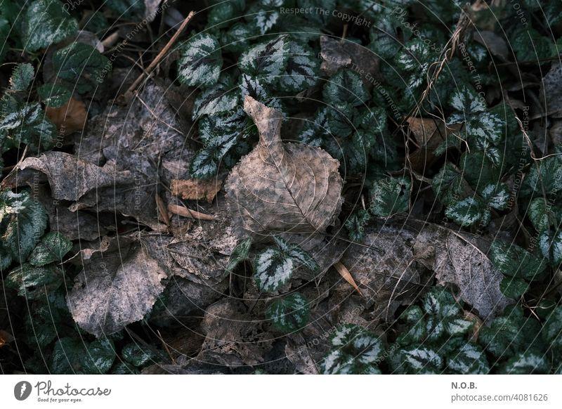 Verrottende Blätter verrotten verrottet alt Gedeckte Farben Nahaufnahme Außenaufnahme Menschenleer Farbfoto Verfall Vergänglichkeit laub Natur