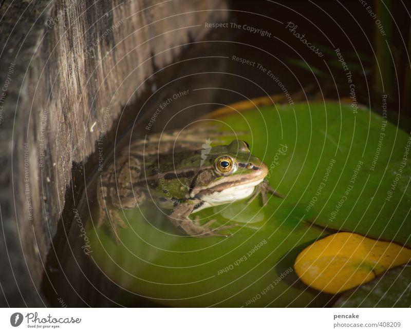 cool bleiben Natur Pflanze Tier Sommer Wildtier Frosch 1 Zeichen Coolness einfach Flüssigkeit kalt niedlich schleimig grün Seerosenblatt Teich Weinfass Garten