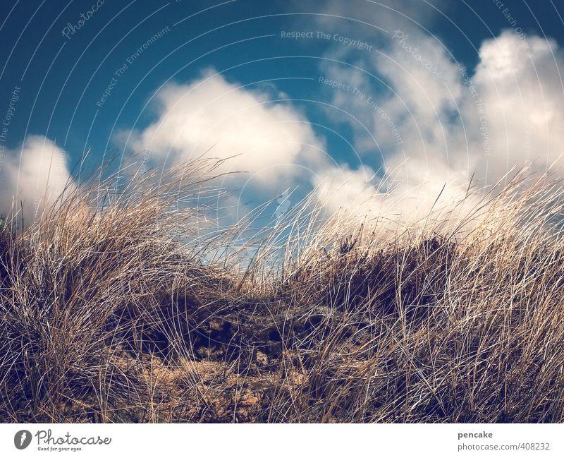 Rømø | nordrausch Natur Landschaft Sommer Gras Küste Nordsee Sand Zeichen authentisch Coolness fantastisch frech Unendlichkeit heiß blau gold Dünengras Luft