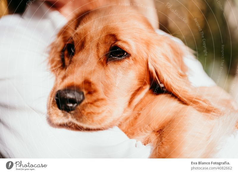 junge Frau und ihr süßer Welpe Cocker Spaniel Hund im Freien in einem Park. Sonniges Wetter. Haustier sonnig Liebe Umarmung Lächeln Kuss züchten Reinrassig
