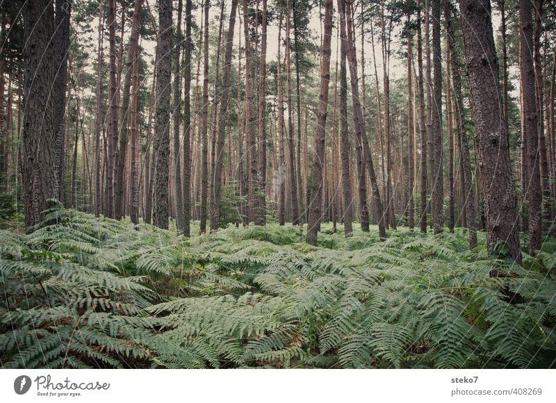 no way Natur Sommer Farn Wald natürlich grau grün Baumstamm Wildnis verirrt orientierungslos Gedeckte Farben Außenaufnahme Menschenleer