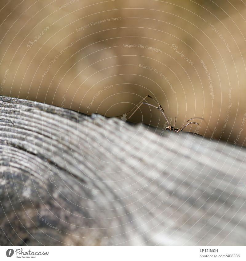 Spinne(r) Tier 1 Holz beobachten warten gruselig Angst Entsetzen Schüchternheit Respekt verstecken Jagd Gelegenheit Farbfoto Nahaufnahme Makroaufnahme
