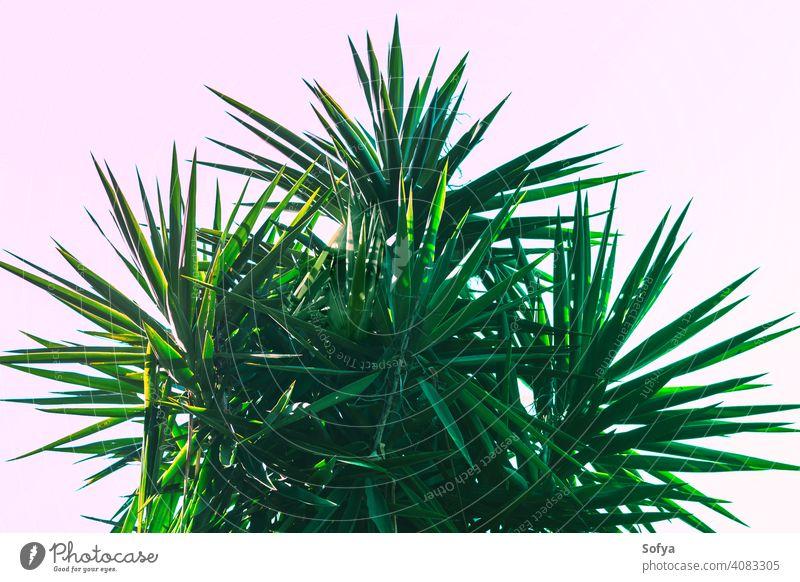 Abstrakter botanischer Hintergrund mit Palme gegen den Himmel Blatt Handfläche grün Pflanze Textur Muster Tapete Laubwerk Sommer abstrakt Natur dunkel Frühling