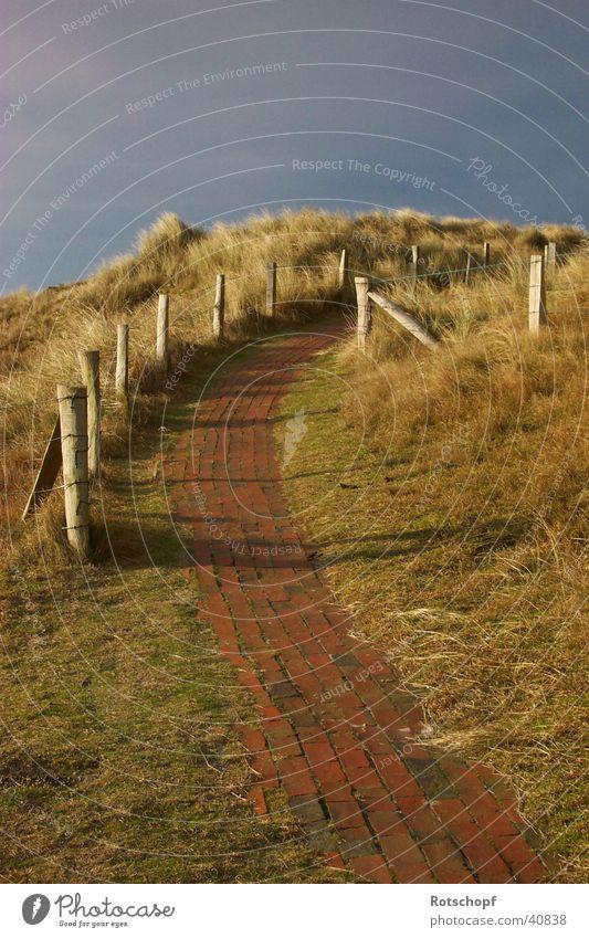 Weg in die Dünen Abendsonne Abenddämmerung Wege & Pfade Stranddüne Nordsee Spaziergang