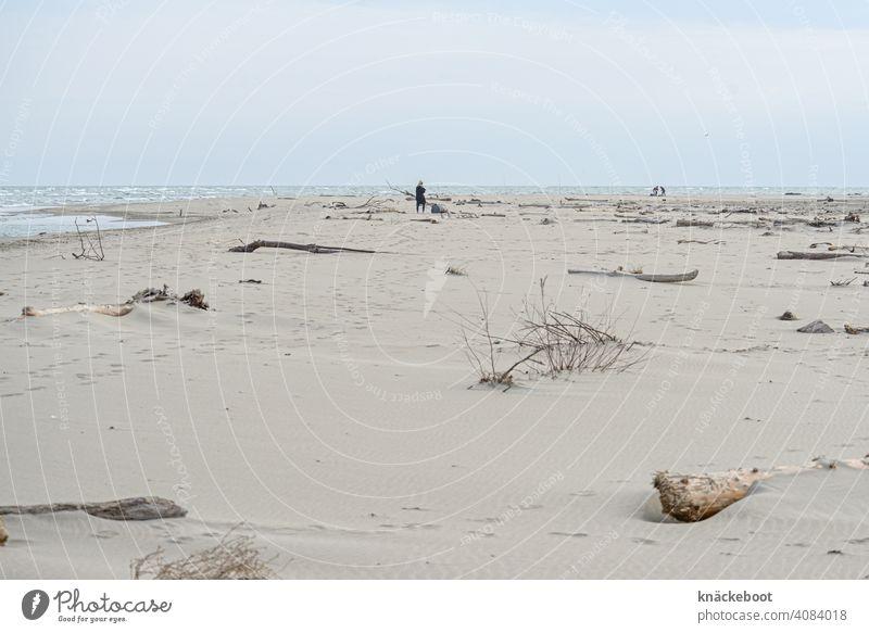 Mittelmeerstrand am Rhônedelta Meer Wasser Strand Treibholz Natur Küste Sand Holz Südfrankreich