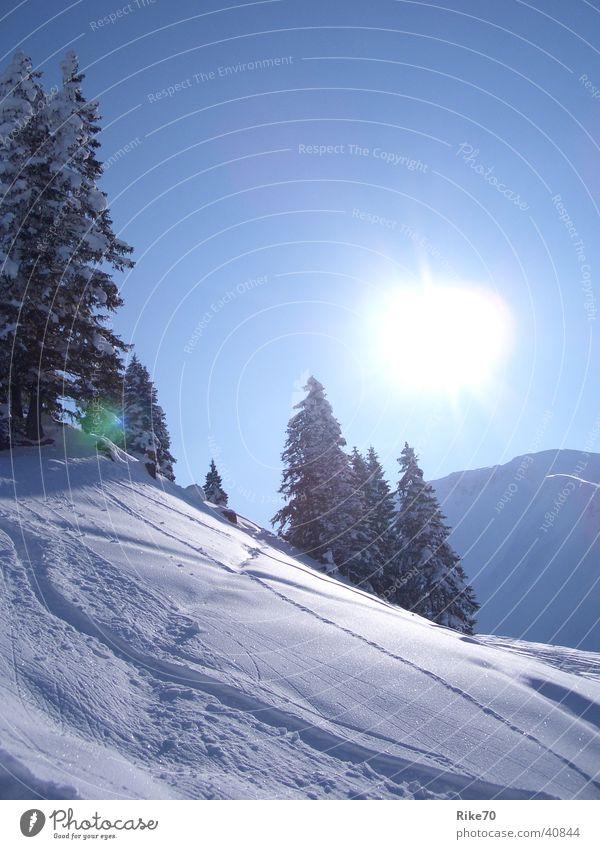 Winterzeit blau Sonne Schnee Berge u. Gebirge Tanne