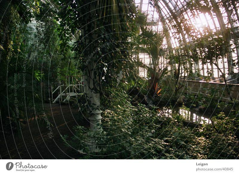 Palmenhaus Wasser grün Pflanze Wege & Pfade Brücke Urwald Wien Wald