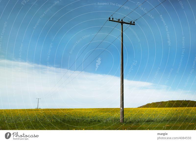 Alte Strommasten über blühende Felder Elektrizität Leitung Energiewirtschaft Kabel Wolken Technik & Technologie Hochspannungsleitung Stromtransport Energiekrise