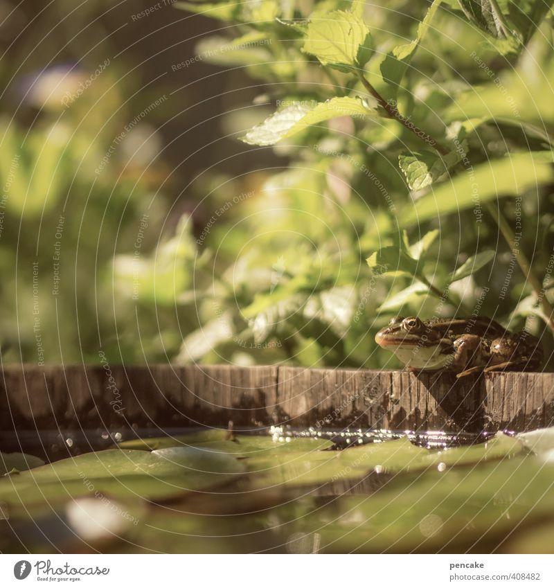 froschperspektive Natur Pflanze Urelemente Wasser Sommer Schönes Wetter Grünpflanze Garten Teich Wildtier Frosch 1 Tier Zeichen Bekanntheit frisch klein