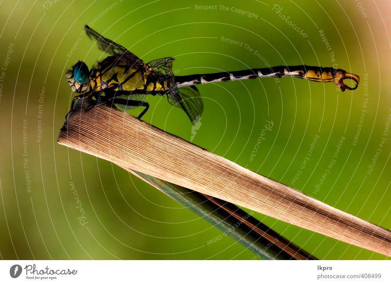 Natur Pflanze grün Farbe Sommer weiß Blatt schwarz gelb grau Garten braun Linie wild Italien Insekt