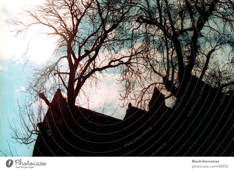 Vor dem Gebäude steht ein Baum Himmel Baum blau Ferien & Urlaub & Reisen Wolken Gebäude Architektur Ast Polen Torun