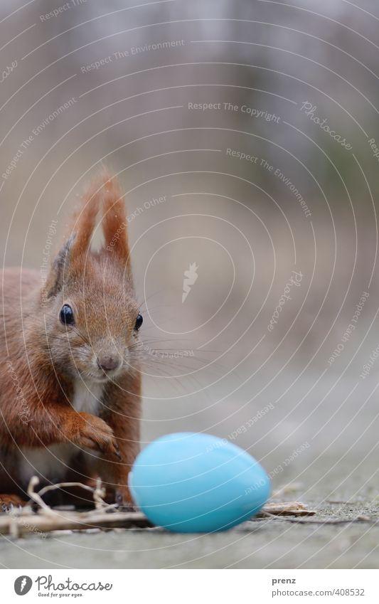 Guten Morgen Natur blau Tier Umwelt braun Wildtier Neugier Ostern Ei Interesse Eichhörnchen Feste & Feiern Osterei interessant