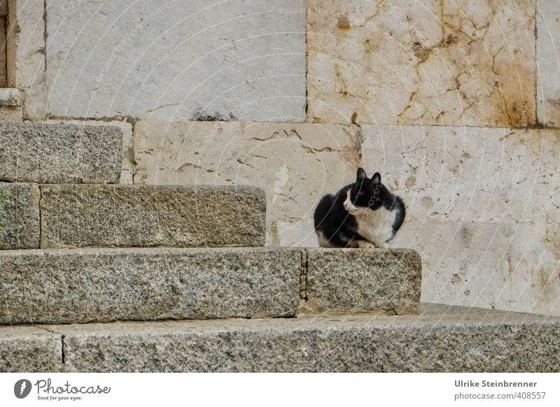 Gatto di strada 1 Katze Stadt alt Einsamkeit Tier Stein Fassade Treppe sitzen warten Platz Armut beobachten dünn Wachsamkeit Appetit & Hunger