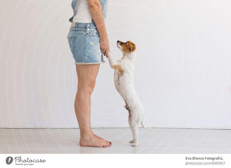 Schöne junge Frau spielt mit ihrem kleinen süßen Hund zu Hause. Lifestyle-Porträt. Liebe für Tiere Konzept. weißem Hintergrund. heimwärts Haustier Glück