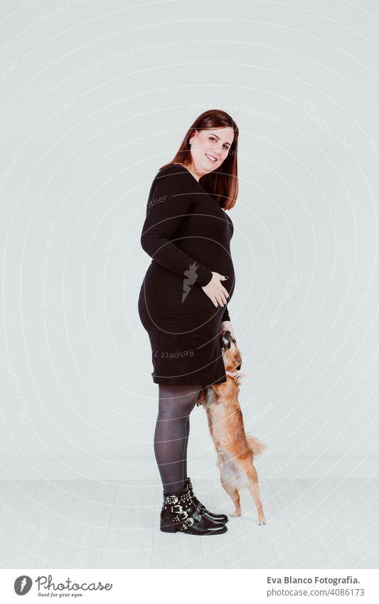V schwanger Frau Mutterschaft Elternschaft Baby erwartend Schwangerschaft Familie heimwärts Haustier Hund im Innenbereich Liebe berührend neugeboren