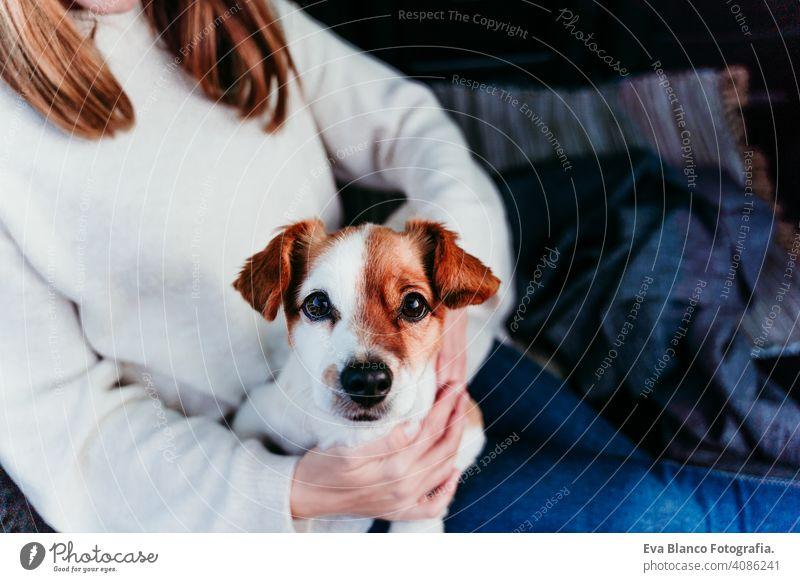 Frau und niedlichen Jack Russell Hund genießen im Freien am Berg in das Auto. Reisen Konzept. Wintersaison PKW Schnee Berge u. Gebirge reisen Lifestyle Fernweh