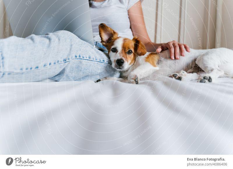 Junge kaukasische Frau auf dem Bett arbeitet am Laptop. Netter kleiner Hund liegt daneben. Liebe für Tiere und Technologie-Konzept. Lebensstil im Innenbereich
