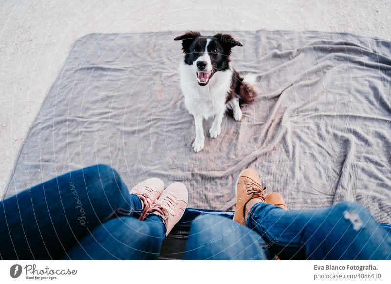 niedlichen Border Collie Hund und zwei Frauen Beine entspannen in einem van. Reise-Konzept Kleintransporter reisen unkenntlich klein Haustier Van Leben reisend
