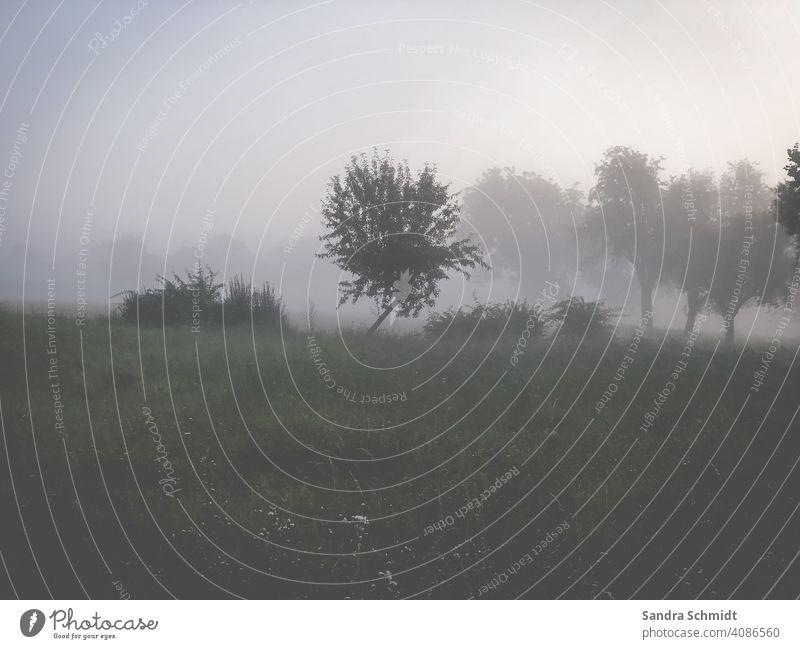 Baum im Nebel baum bäume nebel wiese feld winter herbst morgen abend Nebelschwaden Nebelschleier Nebelstimmung dunkel düster traurig trüb unscharf