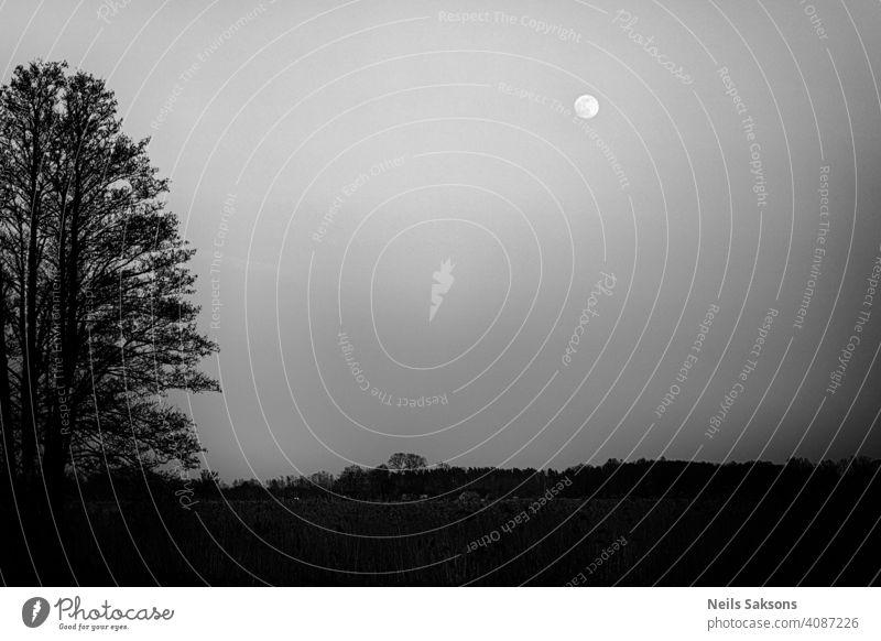 Vorfrühlingsversion des Dämmerungsmysteriums, keine Menschen, nur heulende Wölfe Hintergrund schön Schönheit schwarz blau Windstille dunkel Dunkelheit