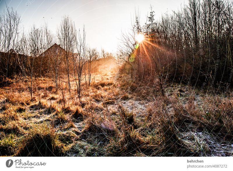 montagmorgen Gras Herbstlandschaft Blätter Herbstwetter Sonnenlicht fantastisch schön Farbfoto Außenaufnahme Licht Kontrast Sträucher Schönes Wetter herbstlich