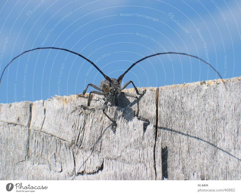 Wunderfitz Insekt Neugier Sonnenbad Fühler Käfer