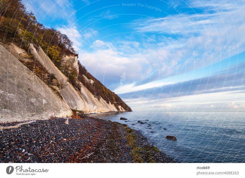Ostseeküste auf der Insel Moen in Dänemark Küste Meer Mons Klint Herbst Mön Landschaft Natur Steine Felsen Strand Bäume Steilküste Urlaub Reise Reiseziel Idylle