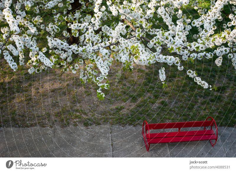 kleine Bank unter weißen Blüten rote Bank Natur weiße Blüten Frühling Wiese Betonplatte blühend Vogelperspektive Kirschbaum DDR Garten Kirschblüten Umwelt