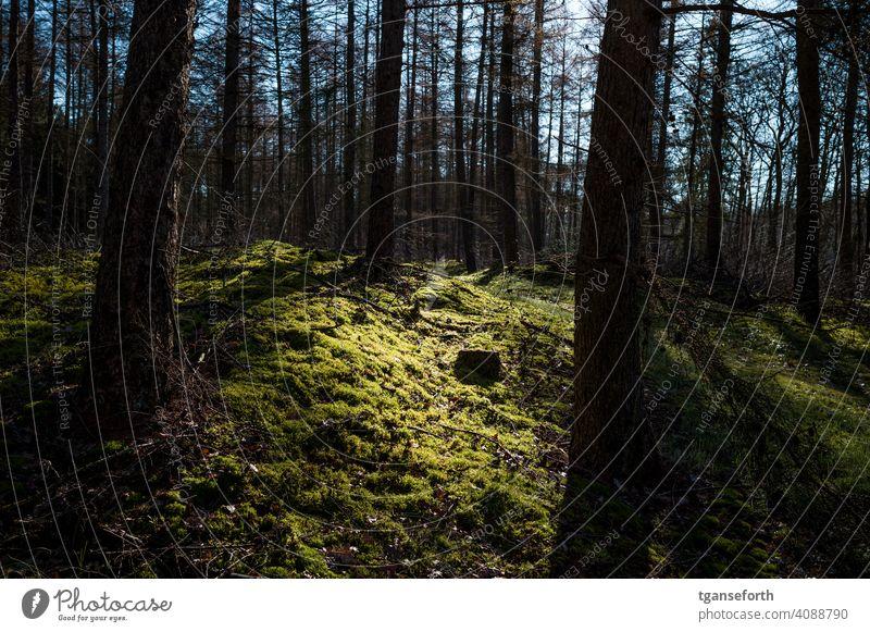 Licht im Wald Moos Außenaufnahme Farbfoto Umwelt Baum grün Tag Menschenleer Waldboden Sonnenlicht Landschaft Wachstum Winter Herbst natürlich ruhig schön Bäume