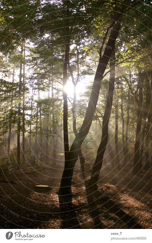 Sonnenschein im Wald (2) Natur
