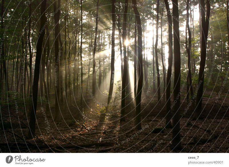 Sonnenschein im Wald Natur