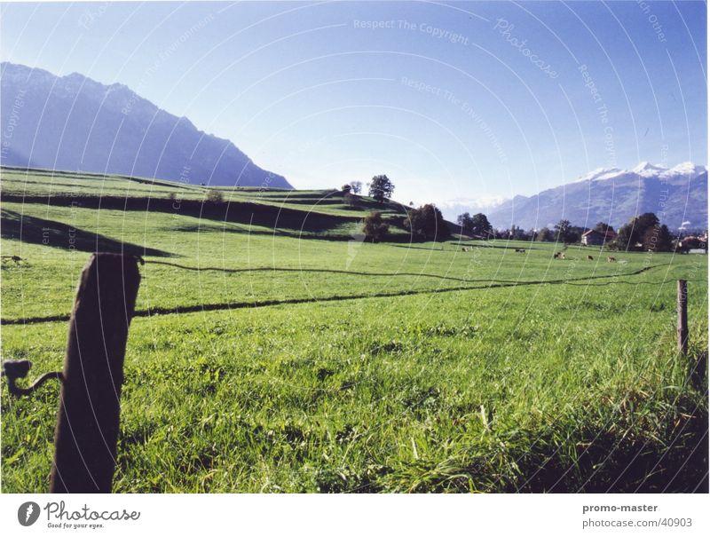 Idyllisches Liechtenstein Wiese Feld Weide Esche Berge u. Gebirge