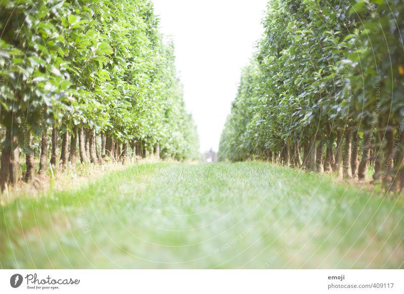 Labyrinth Natur grün Pflanze Sommer Baum Landschaft Umwelt Gras Frühling natürlich Schönes Wetter Landwirtschaft Irrgarten
