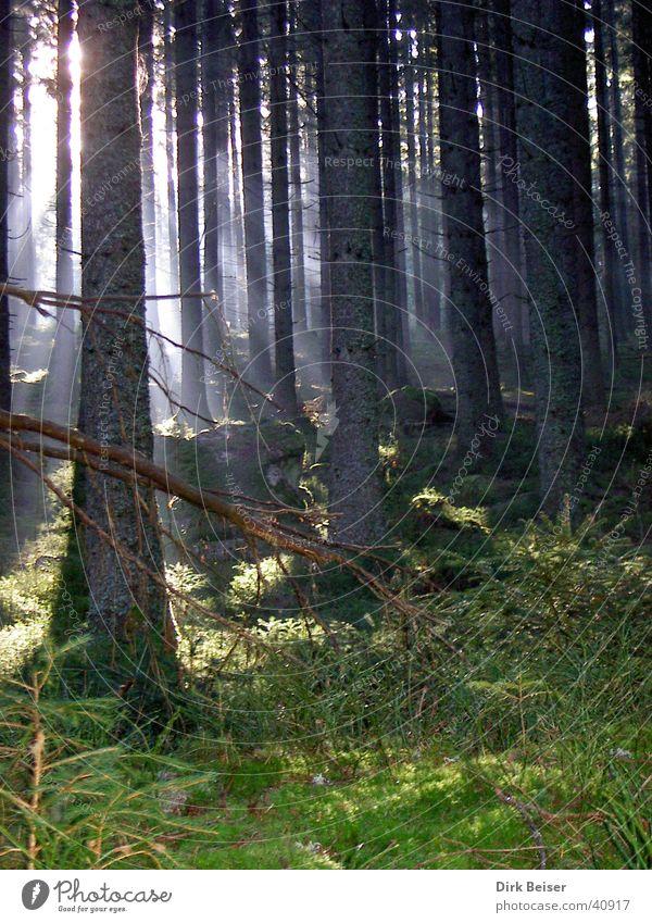 Licht und Schatten Natur Baum Sonne Wald Gras
