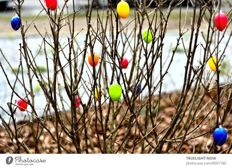 Plötzlich ist ein frisch gepflanzter Strauch an der Straße mit bunten Ostereiern geschmückt, was besonders bei Sonnenschein einen fröhlichen Eindruck macht