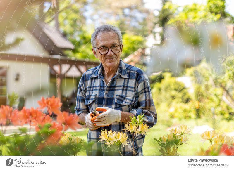 Reifer Mann arbeitet im Garten Senior älter Großvater alt Rentnerin in den Ruhestand getreten gealtert reif heimwärts Haus männlich Menschen Lifestyle
