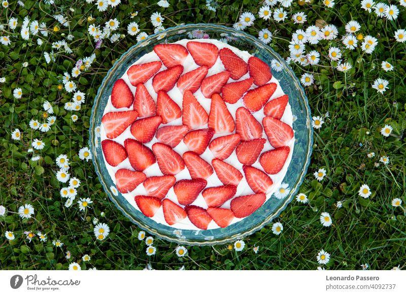 Erdbeer-Tiramisu auf einem Feld von Gänseblümchen im Frühling Erdbeeren erdbeeren Erdbeeren Früchte Kuchen tiramisu Frühlingsblume Margeriten