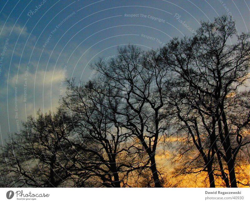 Frühlingsdämmerung Baum Dämmerung positiv diagonal Wolken schwarz Sonnenuntergang blau Himmel Natur Ast orange