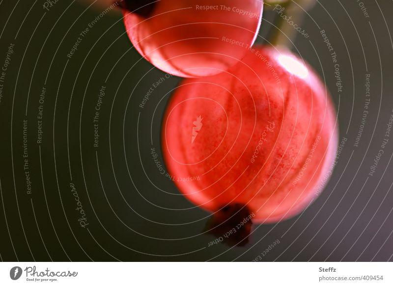 sonnengereifte rote Johannisbeeren lichtvoll rote Früchte Saisonfrüchte Beeren rot und glänzend lecker Gartenfrüchte verlockend frisch saftig durchsichtig