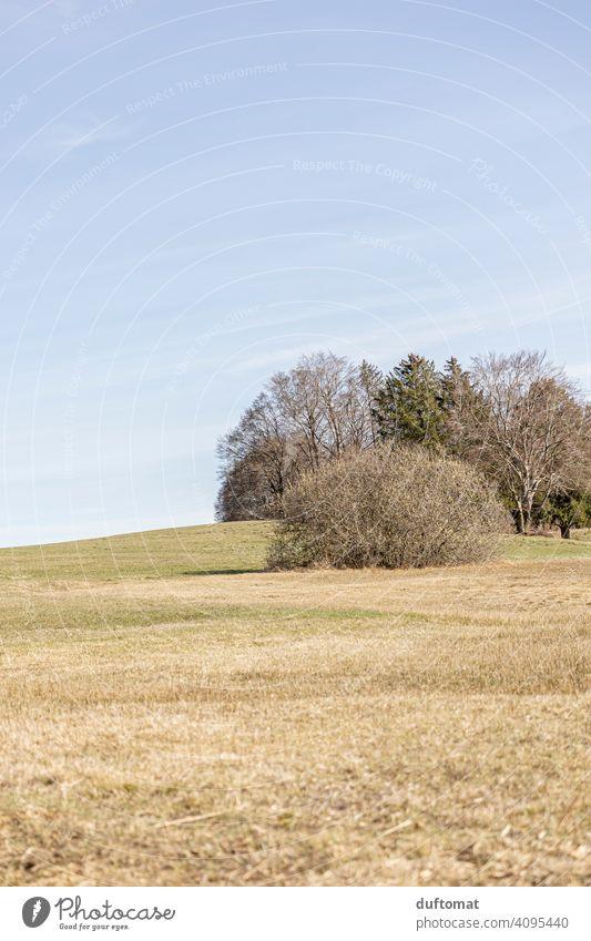 Landschaft mit Hügeln und Bäumen im Frühling, karg und hell Busch Sträucher Frühlinslandschaft Natur Menschenleer Außenaufnahme Umwelt Tag Baum grün Wald Wiese