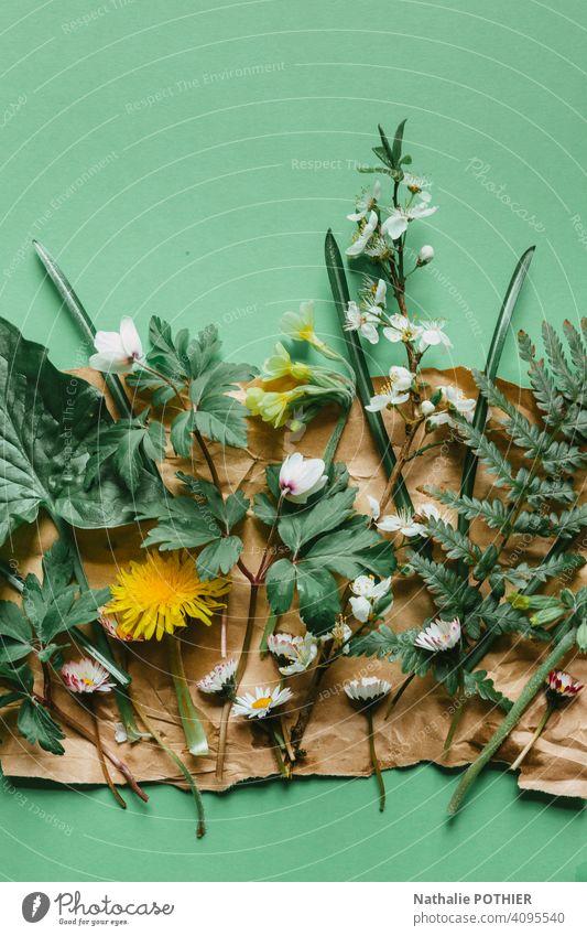 Florale Komposition auf Kraftpapier mit Frühlingsblumen Blume Blumen Natur Garten Frühlingstag Nahaufnahme Frühblüher Blüte Blühend Blütenpflanze Farbfoto